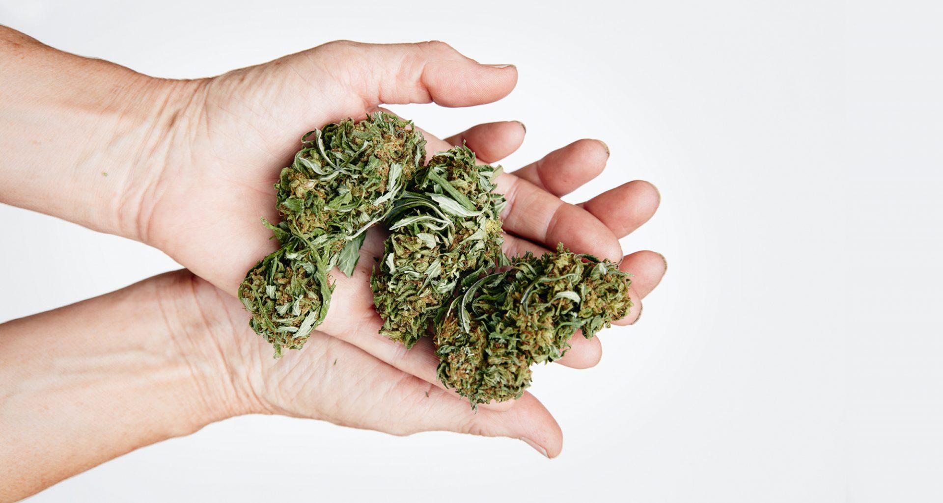 20200821 Cannabis Guide Hero