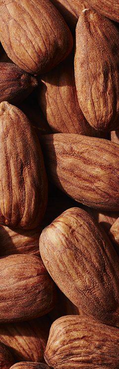 20200821 Terra Texture Almond