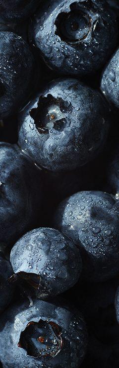 20200821 Terra Texture Blueberry